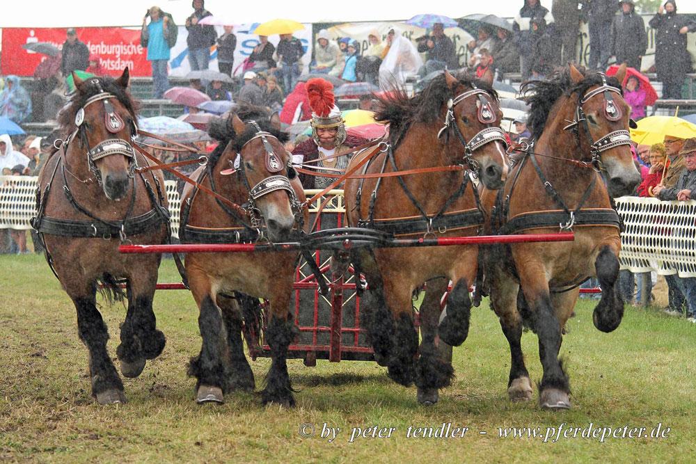 pferdestark-bothe2015